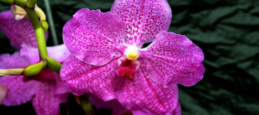 Des orchidées en tout genre