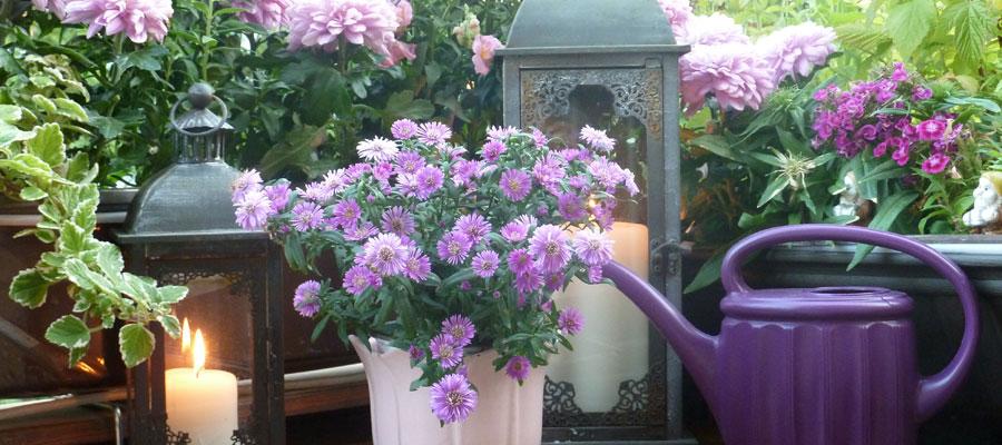 entretien des fleurs et des plantes